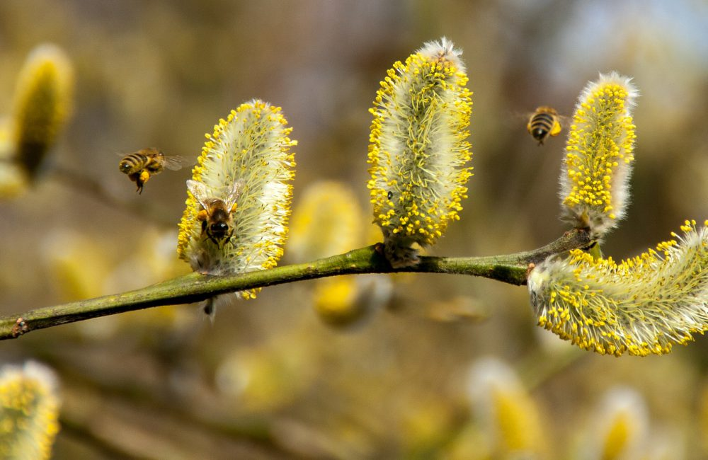bees-2142571_1920