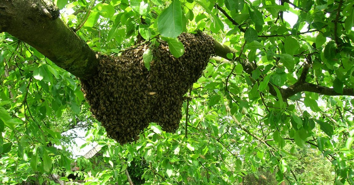 bees-501135_1920